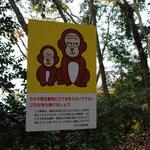 野生動物の餌付け禁止