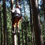 ⑥枝打ち作業、畑の作物と同様に人工林は手入れが必要(御岳山)