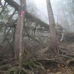 登山道は手入れが必要 登山道倒木