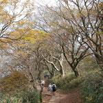 ①茨城県、筑波山(標高877m)の山頂付近、貴重なブナ林が衰退傾向にあり、保全対策が進行中