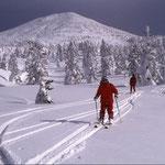①北八甲田山を象徴する樹氷、その間をすり抜けて、緩やかな斜面をスキーで滑走できるのが最大の魅力(青森県青森市)