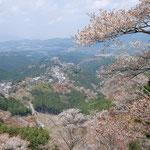 ②上千本からの金峯山寺方面の眺望、役行者が本尊を桜木に刻んだことから桜が御神木になり、信者により植栽されるように