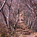①ミズナラ、クリなどの落葉樹の陽だまりの道を歩く、踏みしめる落ち葉の音が心地よい(奥多摩)