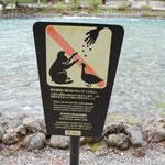 野生動物に餌をやらないでください