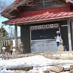 ⑥山頂奥ノ院のシカ、人馴れしたシカの家族が山頂地域に居つく、狩猟期に安全な場所に移動して来るのか?(神奈川県伊勢原市)