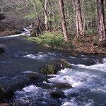 ②青森県奥入瀬川、十和田湖から流出する奥入瀬川沿いに歩道が整備され、ブナ、カツラ、トチノキなどの自然林の中をゆっくりと歩けます。
