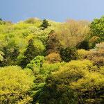 ①新緑の候、萌黄、浅黄、若緑、薄紅など山笑う色彩の饗宴(山梨県上野原市)