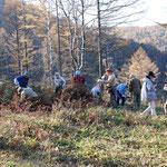ボランティアによるレンゲツツジ群落保全活動(湯の丸高原)