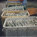 ③ネマガリダケ、6月の湯治場の広場、長期滞在者により採取されたタケノコを仲買する専門の業者も現れます。