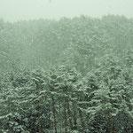 ②森に降る雪、しんしんと降り続ける雪、一夜明けると白銀の世界が出現(長野県木曽町)