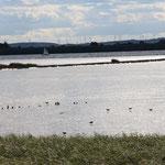 Das Binnenwatt bei Ebbe; Rast- und Platz zur Futtersuche vieler Vögel