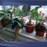 Robin mit 8 Wochen hat sich mang den Blumen versteckt