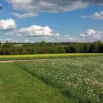 herrliche Landschaft bei Mähring im Oberpfälzer Wald - Bayern