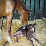 Cernunnus' Geburt