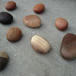 木の石ころ                                    ひとつ500円~1.000円(木によって変わります)
