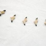 かもめブローチ          メープル・翼は藍染                3.000円