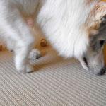 Mit seiner Nase schob der Hund den Klotz lange in der Gegend herum, in der Hoffnung daß er endlich umfällt.