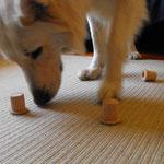 Wie bringe ich den Hund bei, daß er mit seinen Maul den Klotz hochheben würde oder mit der Pfote umschmeißen, so wie Findus und Maruschka das machen?