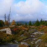 Herbststimmung auf dem Hohnekamm