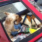 Beim Einkaufen auf der Tiermesse