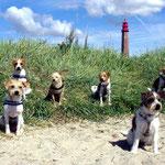 von links : Apollo, Doolittle, Strolch Greta und natürlich gaaaanz vorne Andro!