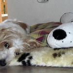 Dakota und ihr Schmusefreund