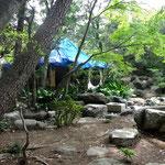 現況の茶庭 Tea gardens current state photo
