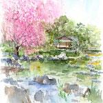 遊濱亭と枝垂れ桜