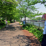 堀川沿いの木陰でスケッチ