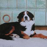 Berner Sennenhund (Farbstifte), verkauft