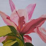 Magnolienblüte (Ölfarben) 40x60 cm