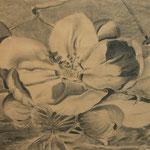 Apfelblüte (Kohle), ungerahmt