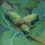 Eicheln (Farbstifte), 10x10 cm, gerahmt