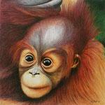 Orang Utan Baby (Farbstift), verkauft