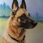 Schäferhund (Farbstifte), verkauft