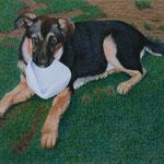 junger Hund (Farbstifte), verkauft