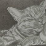 Schlafende Katze (Bleistift), verkauft