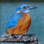 Eisvogel (Farbstift), 10 x 10 cm, gerahmt