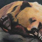 Bär (Farbstift), verkauft