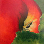 Apfelfliege (Farbstifte) , gerahmt