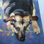 alter Hund (Farbstifte), verkauft