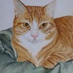Rubi Katze (Farbstift), verkauft
