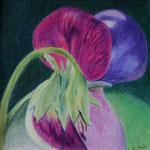 Duftwicke (Farbstifte) 10x10 cm, gerahmt