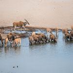 elan antilopes dolomite camp Etosha namibia