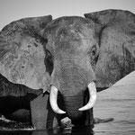 elephant lower zambesi | zambia 2021