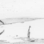 giraffe dolomite camp Etosha namibia
