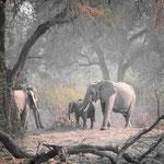 elephants south luangwa | zambia 2021
