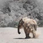 desert elephant hobnob river