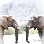 elephants hoanib canyon kaokoveld namibia