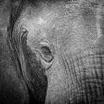 elephant south luangwa | zambia 2021